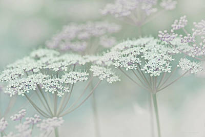 Photograph - Dainty White Flowers Green Lavender by Jennie Marie Schell