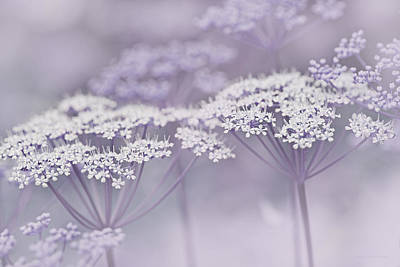Photograph - Dainty White Flowers Lavender by Jennie Marie Schell
