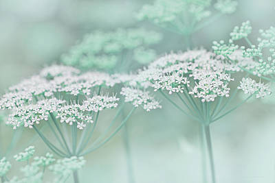 Photograph - Dainty White Flowers Teal by Jennie Marie Schell
