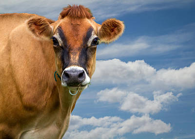 Adorable Photograph - Dairy Cow  Bessy by Bob Orsillo