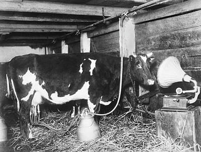 Dairy Cow Listening To Music Art Print by Underwood Archives