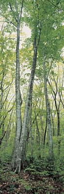 Daisen Tottori Japan Art Print by Panoramic Images