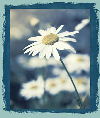 Daisies ... Again - 146a Art Print by Variance Collections