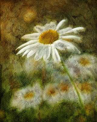Daisies ... Again - P11at01 Art Print by Variance Collections