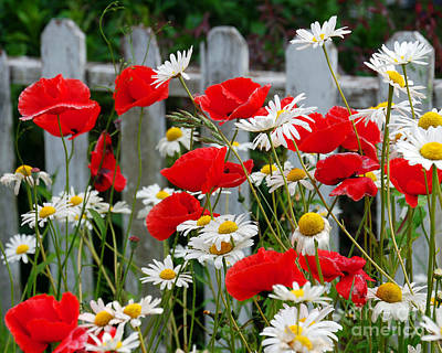 Photograph - Daisies And Poppies II by Chuck Flewelling