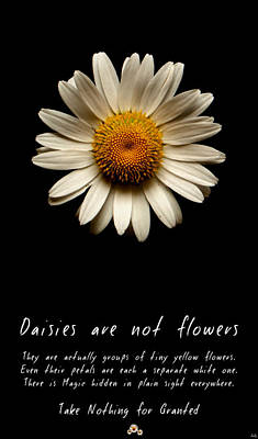 Photograph - Daisies Are Not Flowers by Weston Westmoreland