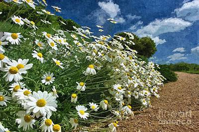 Daisies By The Path - Photo Art Art Print