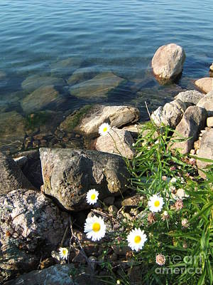 Photograph - Daisies By The River by Margaret McDermott