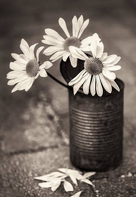 Photograph - Daisies Can by Nancy Strahinic