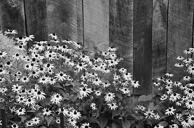 Photograph - Daisies by Craig Burgwardt