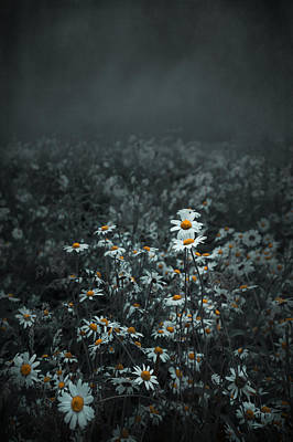 Daisies-daisies Art Print by Svetlana Sewell