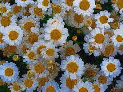 Art Print featuring the photograph Daisies by Diane Miller