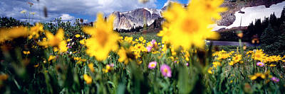Daisies, Flowers, Field, Mountain Art Print by Panoramic Images