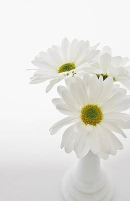 Photograph - Daisies For You by Diane Alexander
