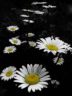 Daisies Art Print by GJ Blackman