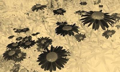 Photograph - Daisies In Negative And Sepia by Tracey Harrington-Simpson
