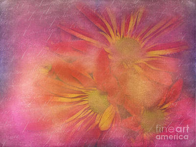 Photograph - Daisies In Pink by Judi Bagwell