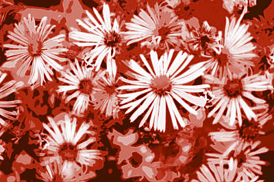 Digital Art - Daisies In Red by Kathleen Stephens