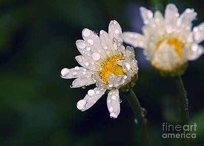 Photograph - Daisies In The Rain by Sharon Woerner