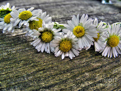 Photograph - Daisies In Wreath by Nina Ficur Feenan