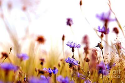 Playful Photograph - Daisies' Meadow by Michal Bednarek