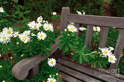 Photograph - Daisies On The Bench by John Rizzuto