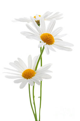 Food And Flowers Still Life - Daisies on white background by Elena Elisseeva