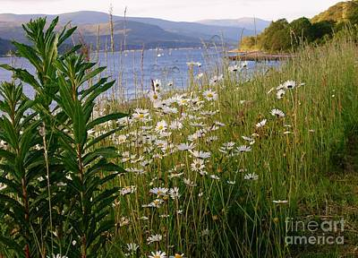Photograph - White Daisies Overlooking Loch Linnhe by Joan-Violet Stretch