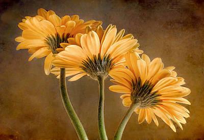 Photograph - Daisies Three by David and Carol Kelly