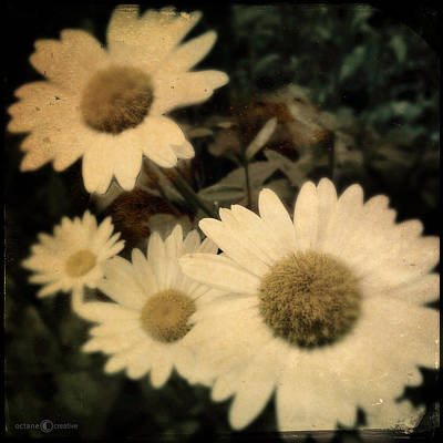Photograph - Daisies by Tim Nyberg