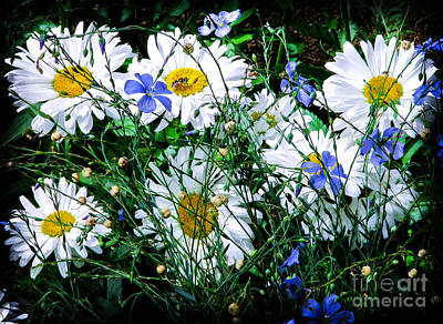Daisies With Blue Flax And Bee Art Print