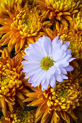 Chrysanthemums Photograph - Daisy Among The Mums by Garry Gay