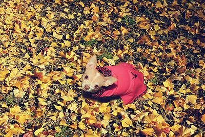 Dog Portrait Photograph - Daisy And A Blanket Of Gold by Laurie Search