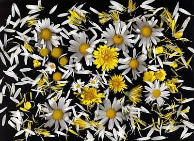 Dandelion Digital Art - Daisy And Dandelion by Lyn  Perry