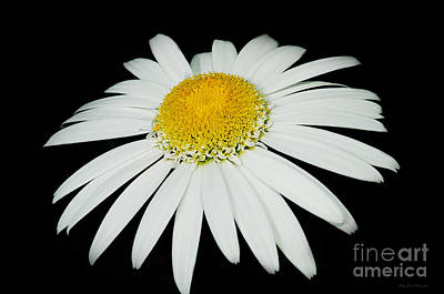Photograph - Daisy Art 2  by MaryJane Armstrong