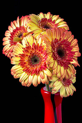 Gerbera Daisy Photograph - Daisy Bouquet by Garry Gay