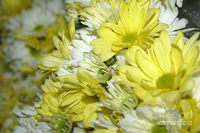 Photograph - Daisy Bouquets by Jennifer White