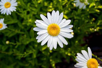 Daisy Original by Gestalt Imagery