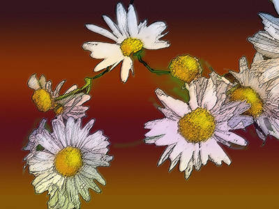 Flora Macdonald Digital Art - Daisy Chain by Ian  MacDonald