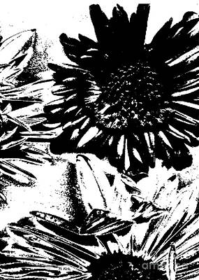 Photograph - Daisy Crop Bw Threshold by Heather Kirk