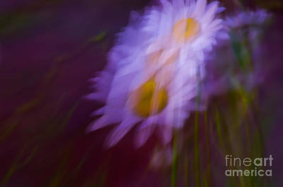 Photograph - Daisy Dance by Adria Trail