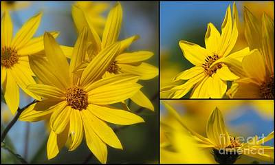 Photograph - Daisy Day  by France Laliberte
