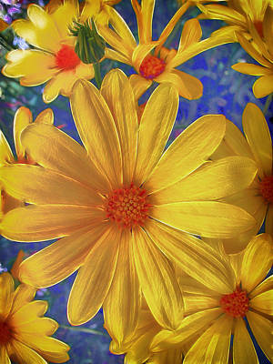 Photograph - Daisy Delight by Fiona Messenger