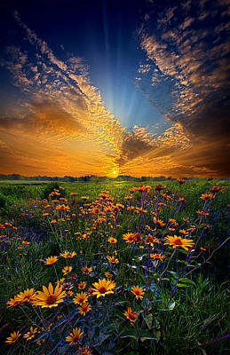 Photograph - Daisy Dream by Phil Koch