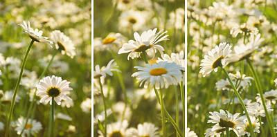 Photograph - Daisy Dreams by Leda Robertson
