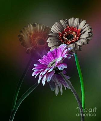 Photograph - Daisy Dreams by Shirley Mangini