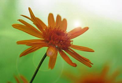 Daisy Dreamscape Original by Suzanne Gaff