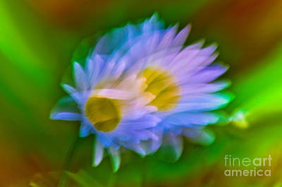 Photograph - Daisy Duet by Adria Trail