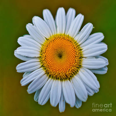 Photograph - Daisy - Duvet Cover Sized by Scott Hervieux