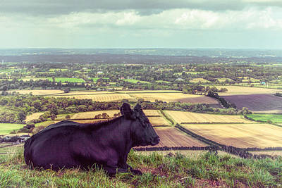 Daisy Enjoys The View From Truleigh Hill Art Print by Chris Lord